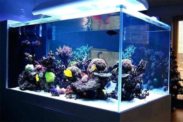 Acrylic aquariums